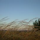 Gentle breeze by Linda Riley