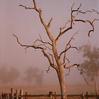 Misty Dawn In the Yards at Oakdale Queensland  Vicki Ferrari Photography by Vicki Ferrari