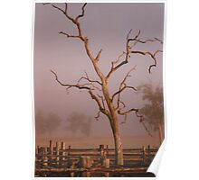 Misty Dawn In the Yards at Oakdale Queensland © Vicki Ferrari Photography Poster