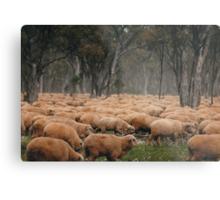 Droving Sheep at Albert  © Vicki Ferrari Photography Metal Print