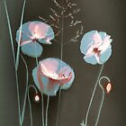 Sunprint of wild Poppies by Paul Woloschuk