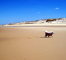 Dog on the beach by daffodil