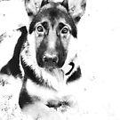 snow shepherd by wendywoo1972