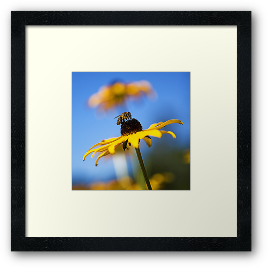 Black Eyed Bee by Mike Stone