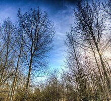 Through The Trees by DavidHornchurch
