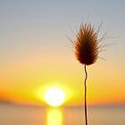 Beautiful Sunset by Paul Golz