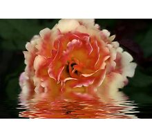 A Rose Is A Rose Photographic Print