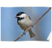 Chickadee on a January Day Poster