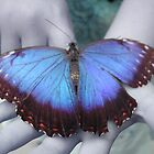 Catching Blue by MoxieNox