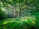 Sunlit Glade: Dartmoor (Near Goodameavy) Devon UK by DonDavisUK
