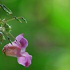 Waterside Flower [  Policemans helmet .] by relayer51