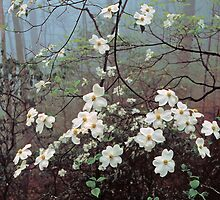 DOGWOOD TREE IN FOG by Chuck Wickham