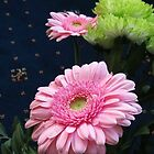 Pretty-in-Pink Gerbera Daisies by BlueMoonRose