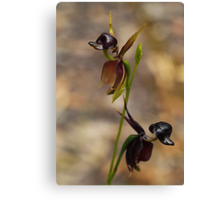 Flying Duck Orchid Duo - Morwell NP Canvas Print