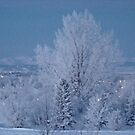 Frosty Rockies by Al Bourassa