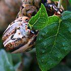 Caterpillar by Guy Tschiderer