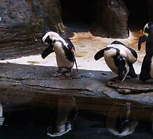 Penguin Reflections by Diana Forgione