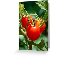 Cherry Tomatoes on the Vine Greeting Card
