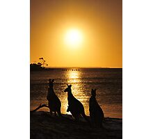 Kangaroo Dream Photographic Print