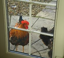 Knock Knock by Alice Oates