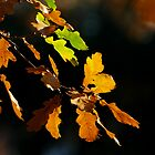 Autumn leaf in the forest by dotweb