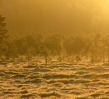 10.1.2009 - part III: Morning Gold by Petri Volanen