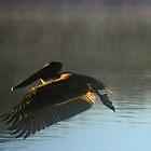 Grace in Flight by Dennis Blauer