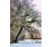 Pastel Frost Photographic Print