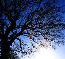 Tree 5 by Robin  Woodward