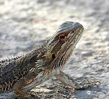 Bearded Dragon by Beryl Smith