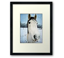 Snow Struck Horse Framed Print