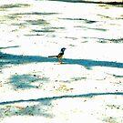 Tiny Bird by Nalin K