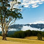 Mt Roland,Tasmania by Tim Wootton