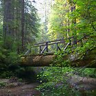 Redwood Crossing by envirocation