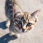 Russian Cat by Joseph Tame