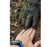 Gorilla Touch Photographic Print