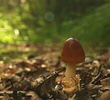 The Little Mushroom by Per Bjarne Pedersen
