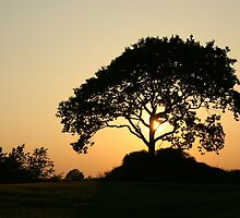 Sunset with a Tree by Per Bjarne Pedersen