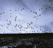 Geese Overrun  by Judi Taylor