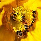 Early Spring Feast Part II by Dennis Stewart