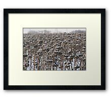 Sunflowers in the Winter Framed Print