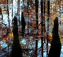 Fall in the Bog by bluerose9062