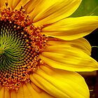 Summer Sunflower by Taylor Russell
