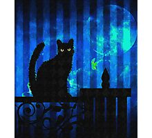 Cat at Dusk Photographic Print