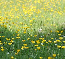 A field of Buttercups by John Keates