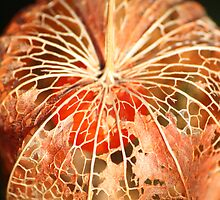 Chinese Lantern Seed  by Pamela Jayne Smith