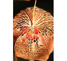 Chinese Lantern Seed  Photographic Print