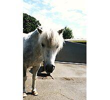 Pony 3 Photographic Print