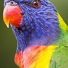 Rainbow Lorikeet by Frank Moroni