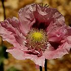 ~Poppy~ by Debra LINKEVICS